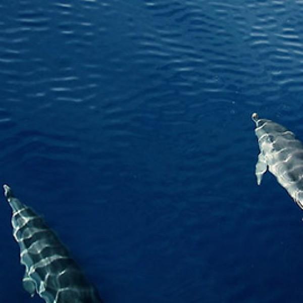 delfini-dovolena.jpg